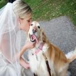 Свадьба с животными